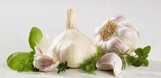 testa d'aglio con spicchi