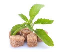 pianta di stevia con zollette di zucchero