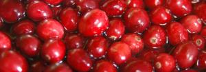 tante bacche rosse di cranberry